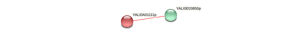 XP_499643.1 protein (Yarrowia lipolytica) - STRING interaction network