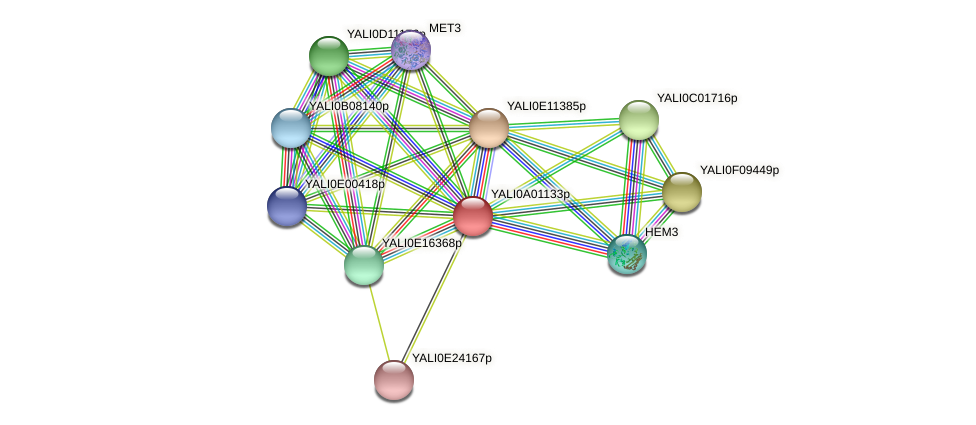XP_499644.1 protein (Yarrowia lipolytica) - STRING interaction network