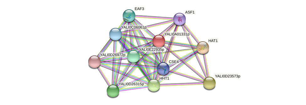 XP_499647.1 protein (Yarrowia lipolytica) - STRING interaction network
