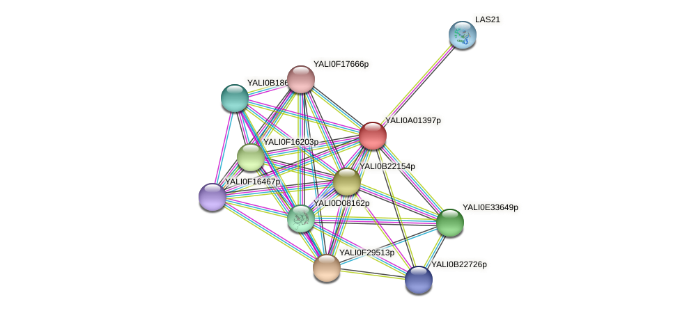 XP_499650.1 protein (Yarrowia lipolytica) - STRING interaction network