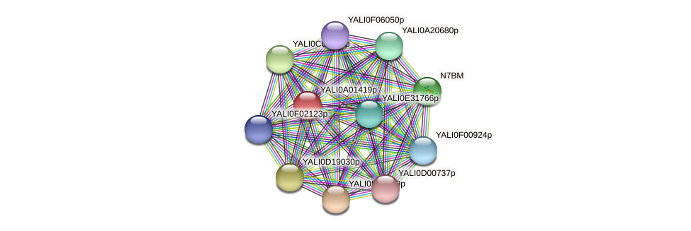 XP_499651.2 protein (Yarrowia lipolytica) - STRING interaction network