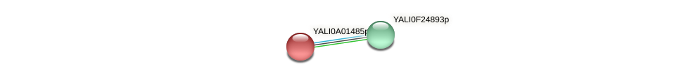 XP_499654.1 protein (Yarrowia lipolytica) - STRING interaction network