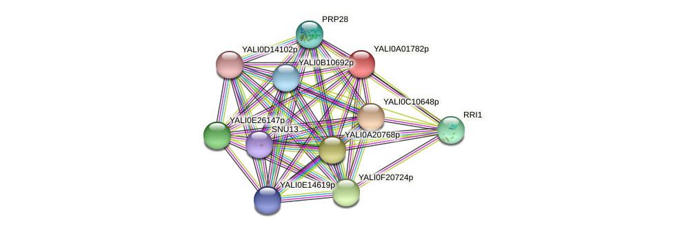 XP_499664.1 protein (Yarrowia lipolytica) - STRING interaction network