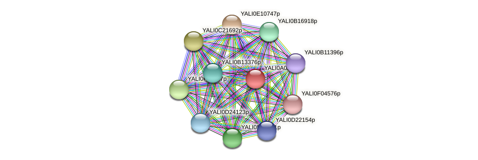 XP_499674.1 protein (Yarrowia lipolytica) - STRING interaction network