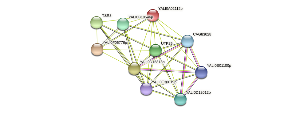 XP_499676.1 protein (Yarrowia lipolytica) - STRING interaction network