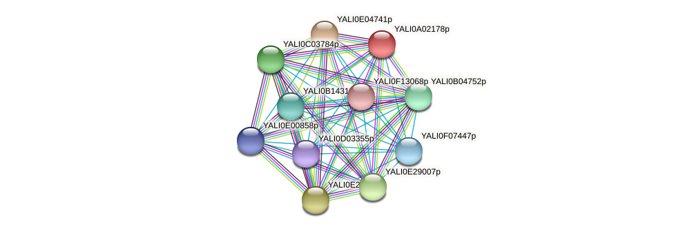 XP_499679.1 protein (Yarrowia lipolytica) - STRING interaction network