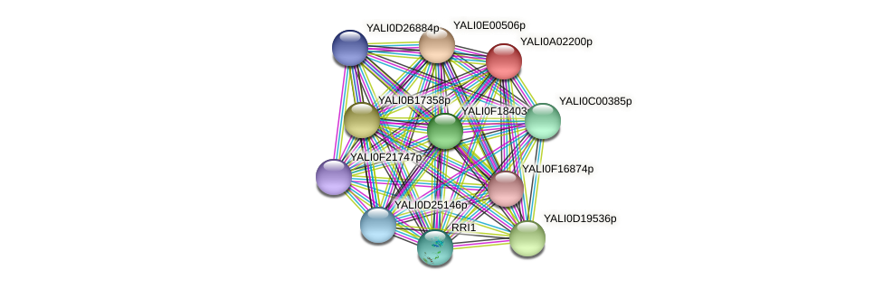 XP_499680.1 protein (Yarrowia lipolytica) - STRING interaction network