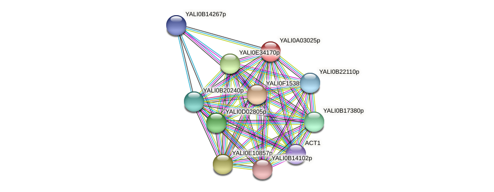 XP_499714.1 protein (Yarrowia lipolytica) - STRING interaction network