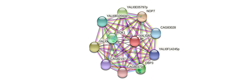 XP_499736.1 protein (Yarrowia lipolytica) - STRING interaction network
