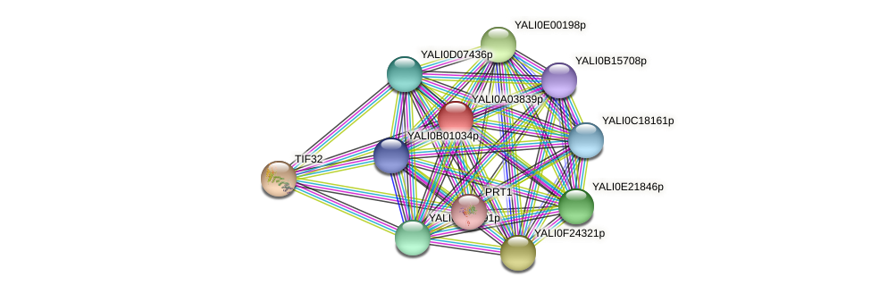 XP_499738.1 protein (Yarrowia lipolytica) - STRING interaction network