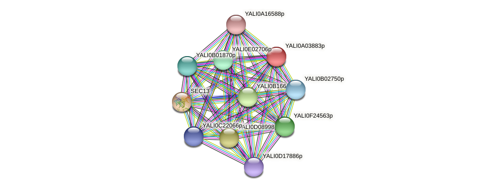 XP_499740.1 protein (Yarrowia lipolytica) - STRING interaction network