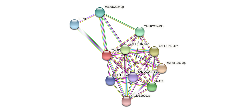 XP_499748.1 protein (Yarrowia lipolytica) - STRING interaction network