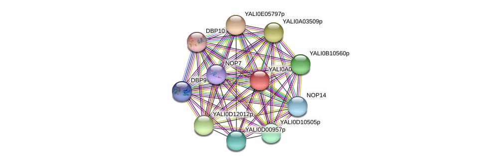 XP_499768.1 protein (Yarrowia lipolytica) - STRING interaction network