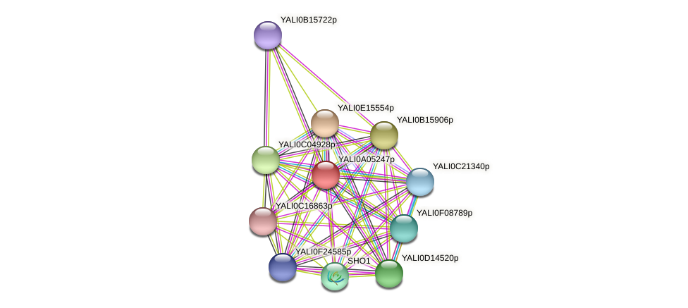 XP_499779.1 protein (Yarrowia lipolytica) - STRING interaction network