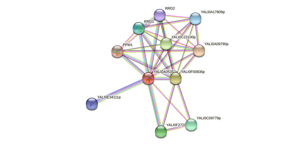 XP_499783.1 protein (Yarrowia lipolytica) - STRING interaction network