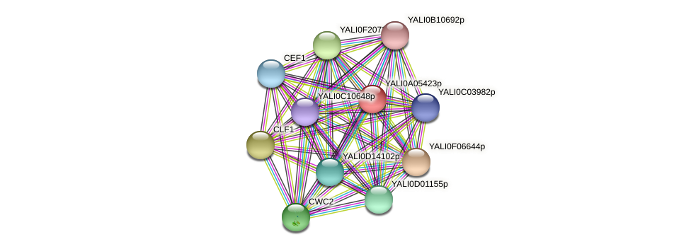 XP_499786.1 protein (Yarrowia lipolytica) - STRING interaction network