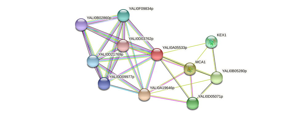 XP_499787.1 protein (Yarrowia lipolytica) - STRING interaction network