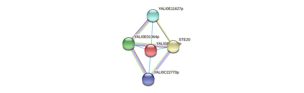XP_499816.1 protein (Yarrowia lipolytica) - STRING interaction network