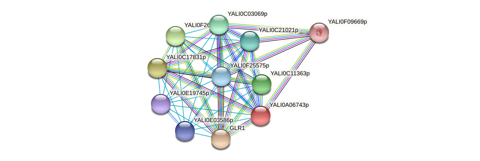 XP_499818.1 protein (Yarrowia lipolytica) - STRING interaction network