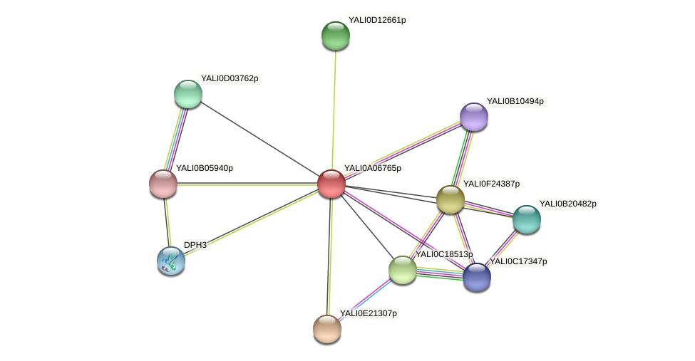 XP_499819.1 protein (Yarrowia lipolytica) - STRING interaction network