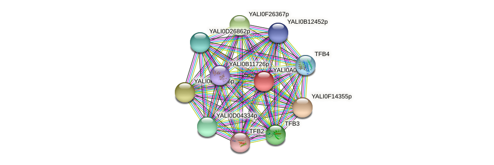 XP_499830.1 protein (Yarrowia lipolytica) - STRING interaction network