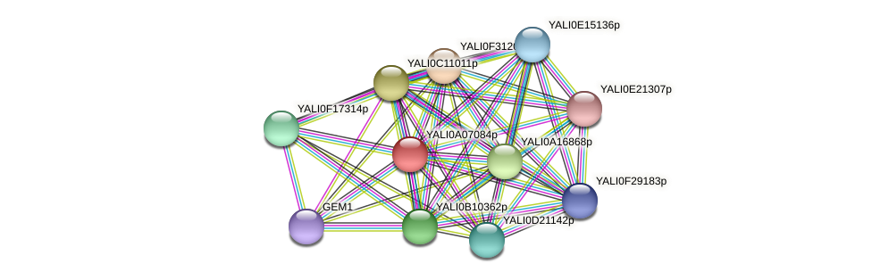 XP_499833.1 protein (Yarrowia lipolytica) - STRING interaction network