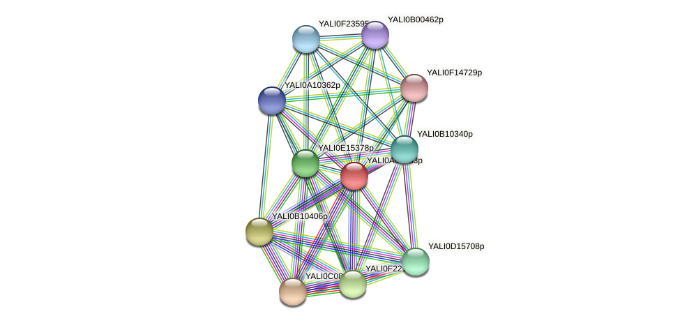 XP_499850.1 protein (Yarrowia lipolytica) - STRING interaction network
