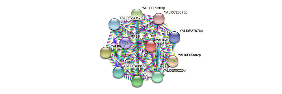XP_499865.1 protein (Yarrowia lipolytica) - STRING interaction network