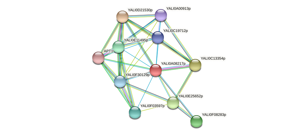 XP_499868.1 protein (Yarrowia lipolytica) - STRING interaction network