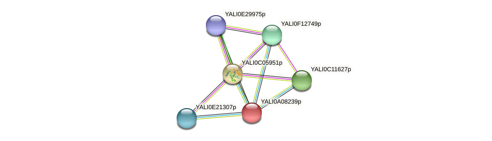 XP_499869.1 protein (Yarrowia lipolytica) - STRING interaction network