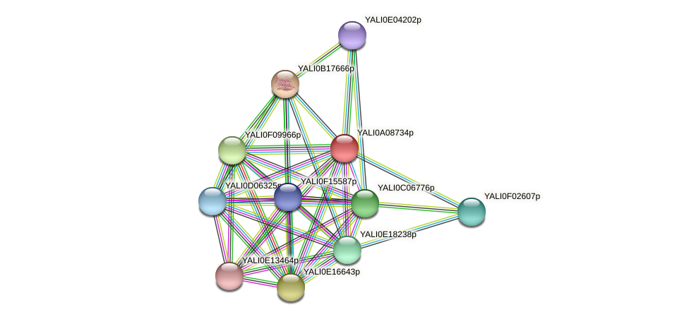 XP_499884.1 protein (Yarrowia lipolytica) - STRING interaction network