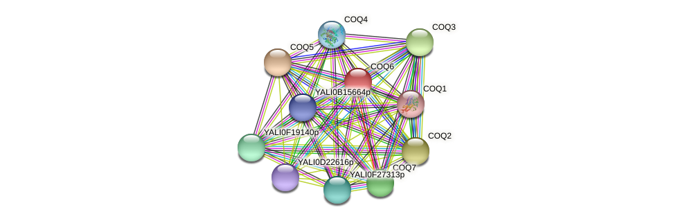 XP_499891.1 protein (Yarrowia lipolytica) - STRING interaction network