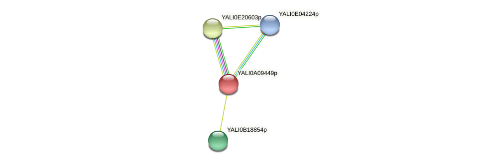 XP_499903.1 protein (Yarrowia lipolytica) - STRING interaction network