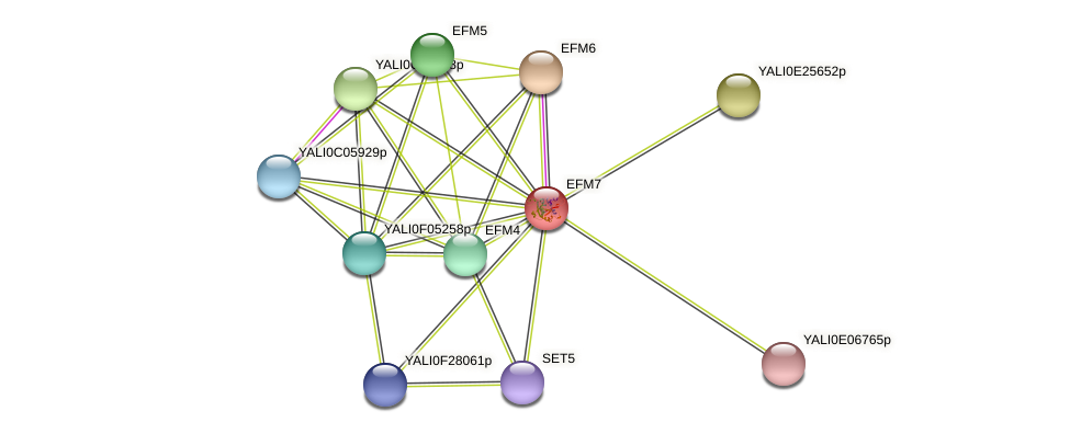 NNT1 protein (Yarrowia lipolytica) - STRING interaction network