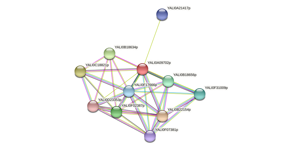 XP_499915.1 protein (Yarrowia lipolytica) - STRING interaction network
