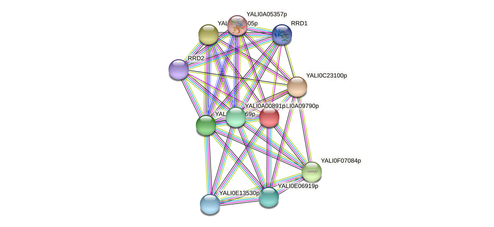 XP_499919.1 protein (Yarrowia lipolytica) - STRING interaction network