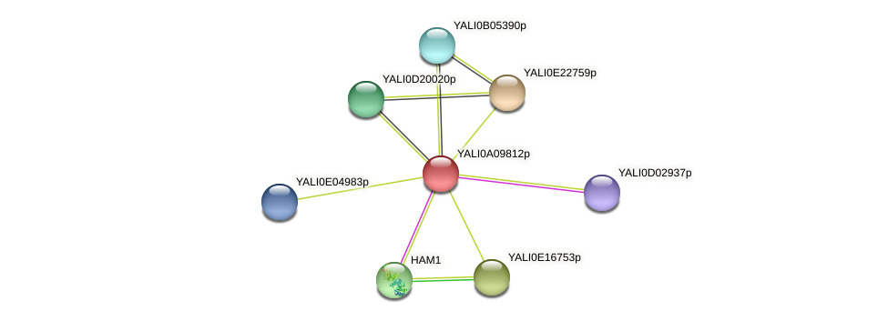 XP_499920.1 protein (Yarrowia lipolytica) - STRING interaction network