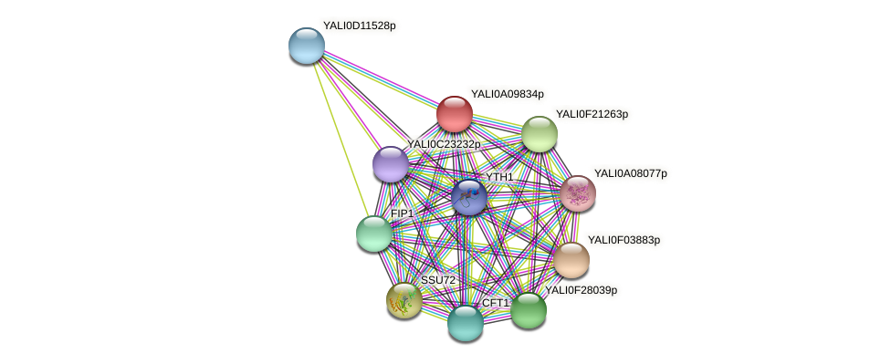 XP_499921.1 protein (Yarrowia lipolytica) - STRING interaction network