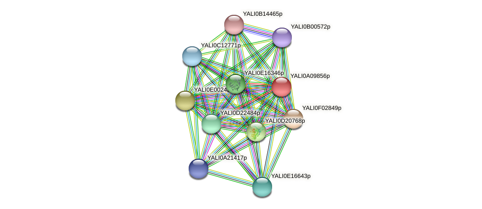 XP_499922.1 protein (Yarrowia lipolytica) - STRING interaction network