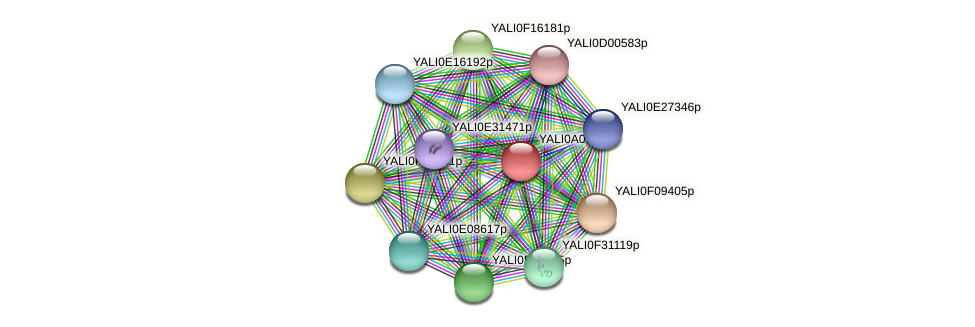 XP_499924.1 protein (Yarrowia lipolytica) - STRING interaction network