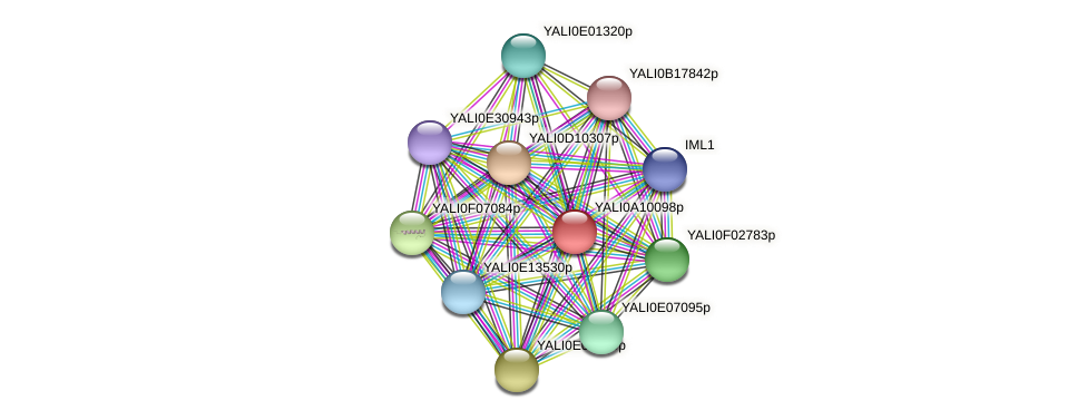 XP_499930.1 protein (Yarrowia lipolytica) - STRING interaction network