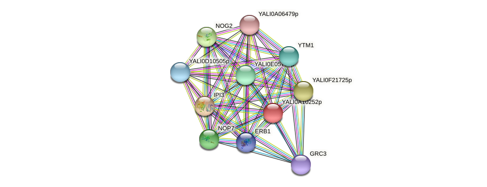 XP_499937.1 protein (Yarrowia lipolytica) - STRING interaction network