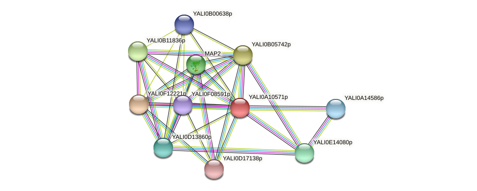 XP_499949.1 protein (Yarrowia lipolytica) - STRING interaction network