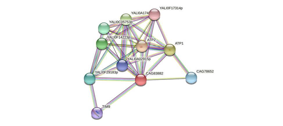 XP_499953.1 protein (Yarrowia lipolytica) - STRING interaction network