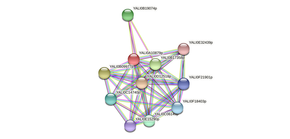 XP_499961.1 protein (Yarrowia lipolytica) - STRING interaction network