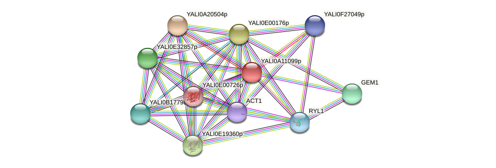 XP_499969.1 protein (Yarrowia lipolytica) - STRING interaction network
