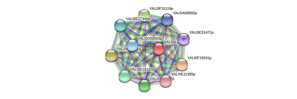 XP_499971.1 protein (Yarrowia lipolytica) - STRING interaction network