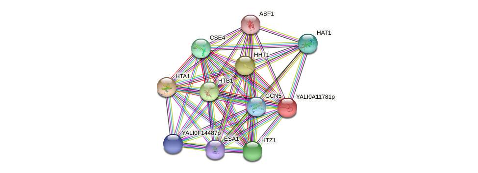 XP_499991.1 protein (Yarrowia lipolytica) - STRING interaction network