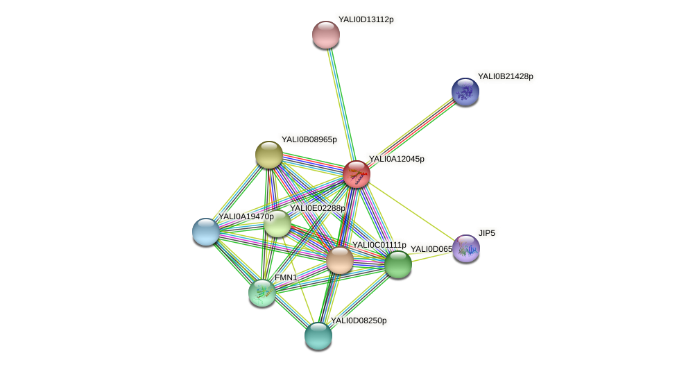XP_500000.1 protein (Yarrowia lipolytica) - STRING interaction network