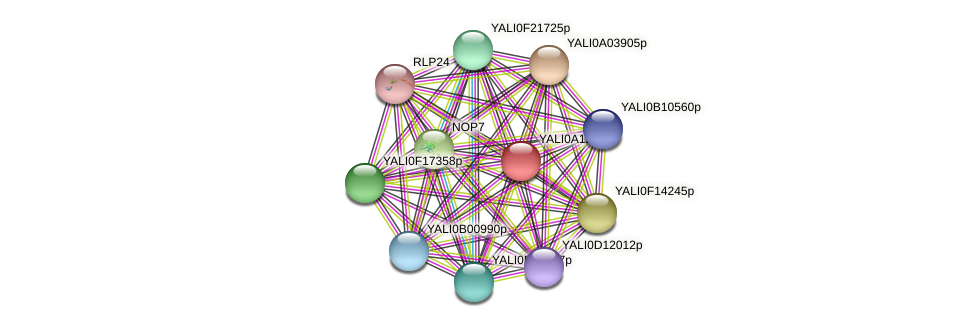 XP_500001.1 protein (Yarrowia lipolytica) - STRING interaction network